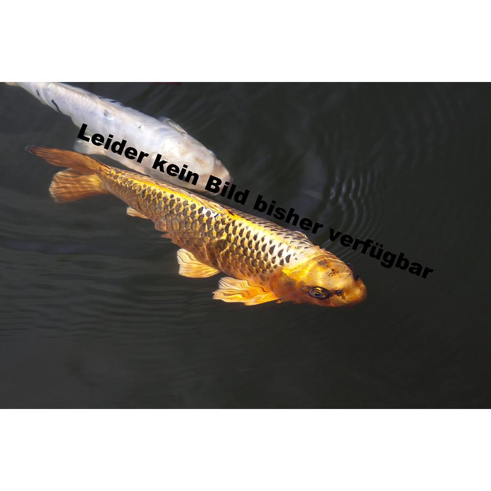 Premofisch bachflohkrebse 6l premofisch for Beliebte teichfische